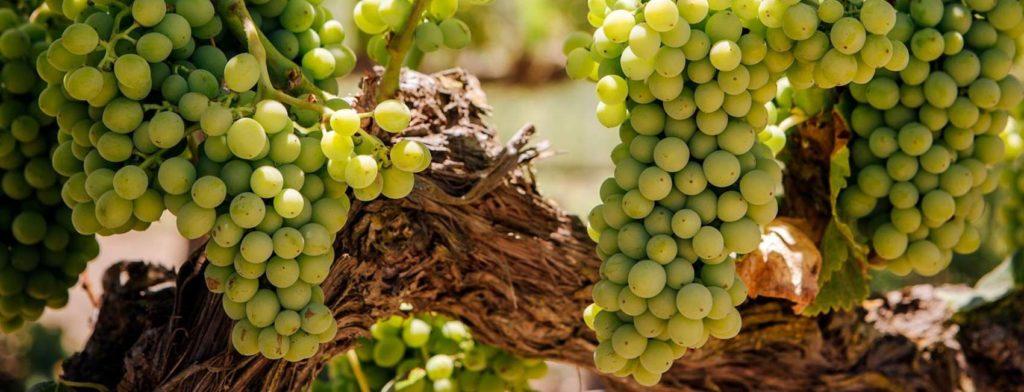 Wine & Spirit shop Providenciales TCI